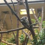 東山動植物園へのアクセス|地下鉄【東山線】で最寄り駅から3分!